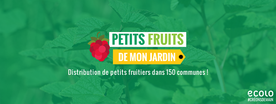 Distribution d'arbustes fruitiers – Ecolo Fontaine-l'Evêque