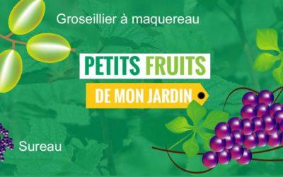 Distribution d'arbustes fruitiers à Leernes dimanche 25